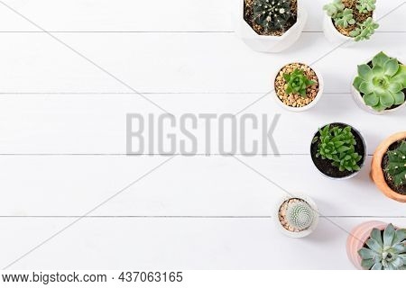 Potted cactus and succulent border flat lay with blank space