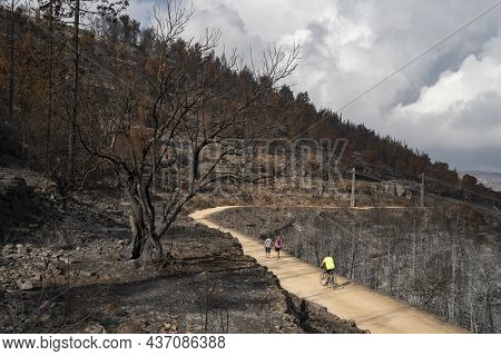 Jerusalem, Israel - September 7th, 2021: People Hiking And Biking On A Path In A Forest Burnt By A W