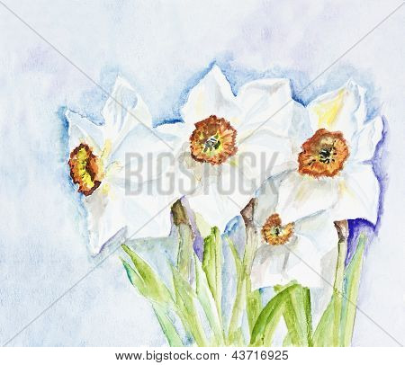 Narcissus Spring  Flowers