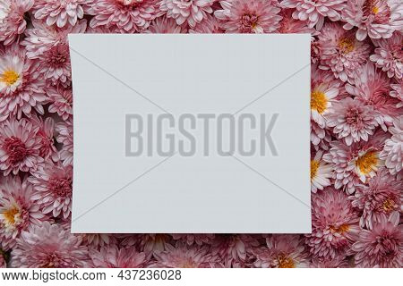 White Paper Card On Background Of Pink Chrysanthemum Flowers Close-up With Empty Space For Text, Cop