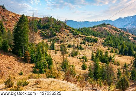 Autumn Landscape In Mountains. Green Spruce Trees On The Hill And Beech Forest In Fall Foliage In Th