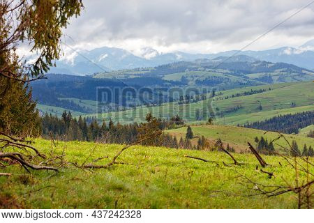 Spring Landscape Of The Mountain Carpathians With Wet Fogs, Hills Overgrown With Green Grass And Low