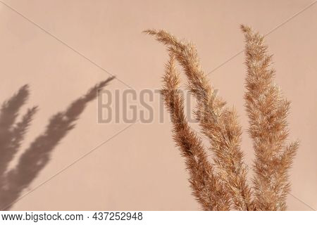 Creative Copyspace With Pampas Grass And Shadows On A Soft Beige Wall. Top View Of Dry Flowers And T
