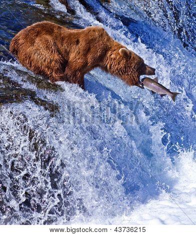 Grizly Bear fishing at Alaska