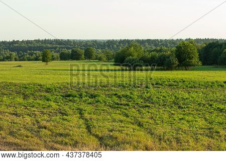 Green Plain View Trees Forest Grass Leaves Nature. High Quality Photo