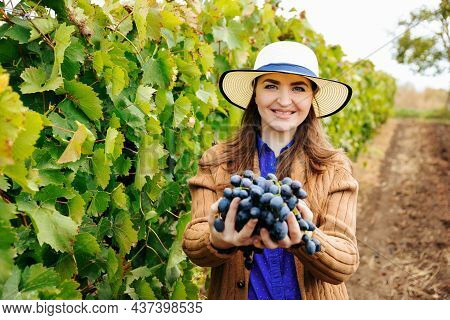 Young Woman Winemaker With Hat Shows A Heap Of Red Grapes And Looking At Camera. Happy Female Betwee
