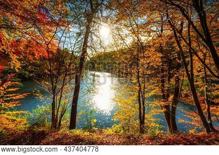Autumnal landscape of a forest by the river in Kashubia. Poland