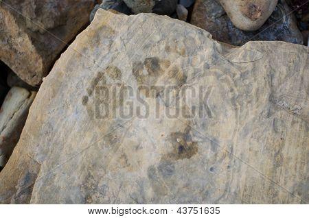 Steps on a rock