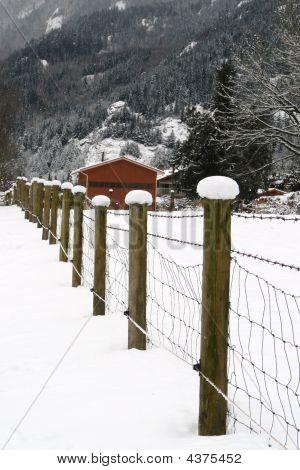 Snow Topped Fenceline
