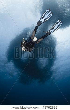 Diver And Sardines Run