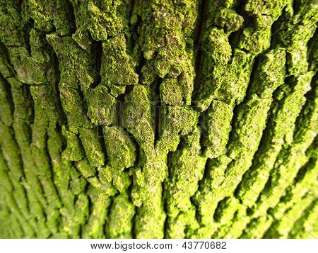 Structure of tree bark covered with green lichen poster