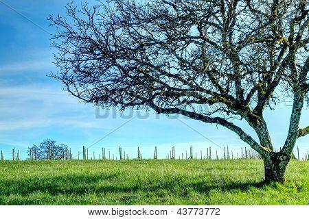 Rex Hill Tree