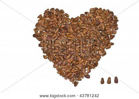 Nuts Pine
