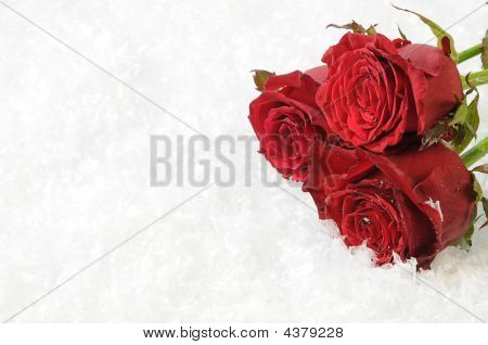 Three Red Roses On The White Snow