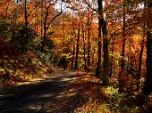 Orange yellow and red fall trees along a drive in Great Smoky Mountains National Park poster