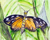 Watercolor tropical butterfly on green leaf- handmade watercolor painting illustration on a white paper art background poster