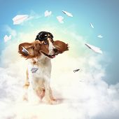 A dog wearing a helmet pilot. Dreams of the sky. Funny Collage poster