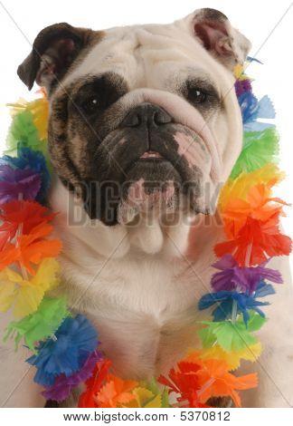 Bulldog Wearing Lei