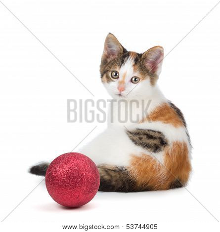 Cute Calico Kitten Sitting Next To A Christmas Ornament On A White Background.