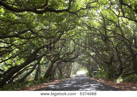 Beautiful Road And Bikers