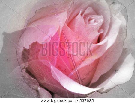 Arrangement In Pink