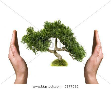 Tree held in hand