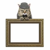cat in a hat and tie butterfly relies on the picture frame isolated on white background poster