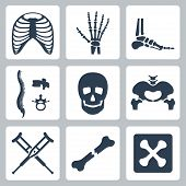 Vector isolated skeleton icons set over white poster