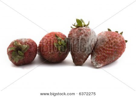 Rotten Strawberries With Mould Growth Isolated On White Background