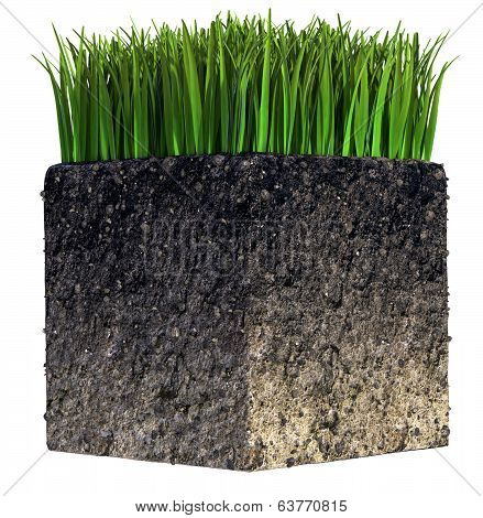 Grass and Soil