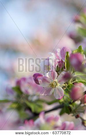 Spring Blossom Macro