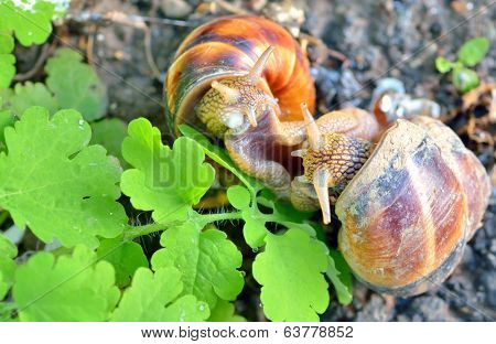 love snails in spring time