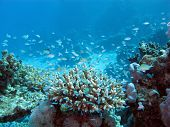 coral reef on the seabed at great depth on a background of blue water poster