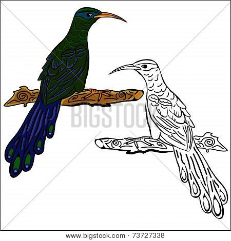 Vector contour and painted birds on a white background poster