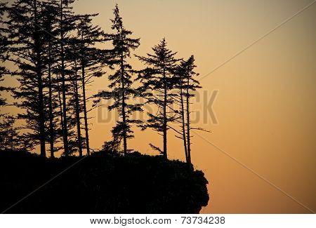 Sunset Trees on a Cliff, Oregon Coast USA