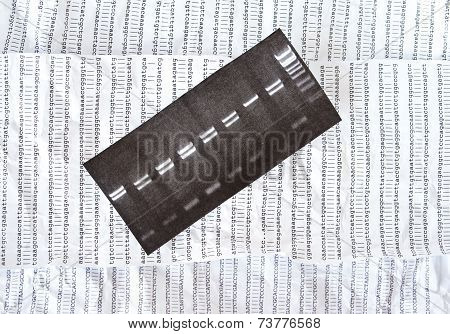 Electrophoresis picture on a crumpled DNA sequence background