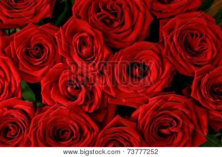Seamless Red roses background