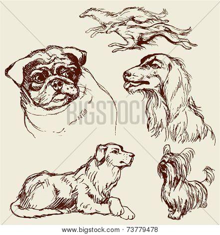 Set Of Dogs - Labrador Retriever, Hound, Pug, Setter, Lap-dog -  Hand Drawn Illustration -sketch In