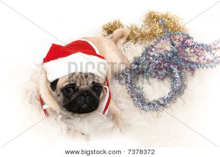 Photo of sweet pug in Santa's cap on the white background poster