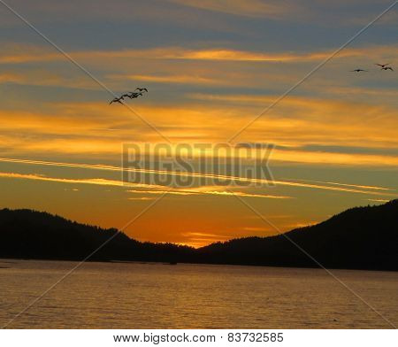 Silhoutted Pelicans Big Bear Lake Sunset