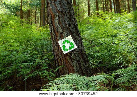 Recycle Sign On A Pine Tree
