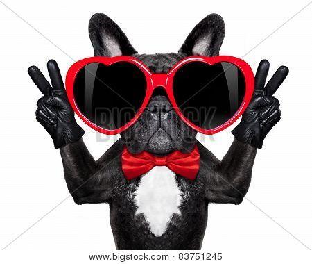 Happy Cool Dog
