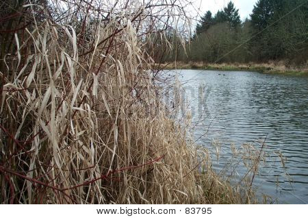 Oregon Duck Pond
