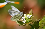 Butterfly in bright Sunshine on a Plant poster