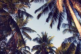 Blue sky through palm trees. Vintage filter