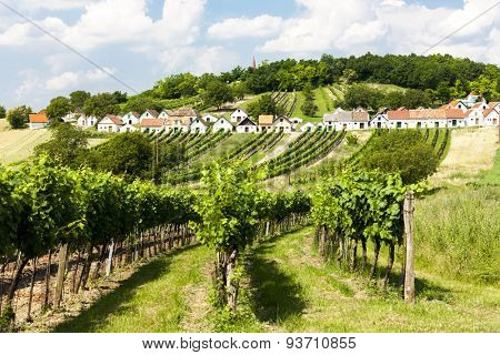 wine cellars with vineyards, Galgenberg, Lower Austria, Austria