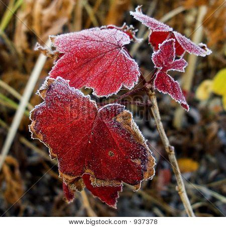 Redfrost_8