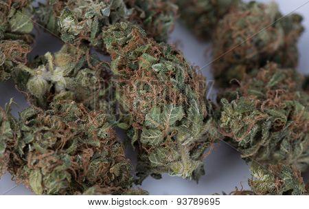 Blue Widow Medicinal Marijuana