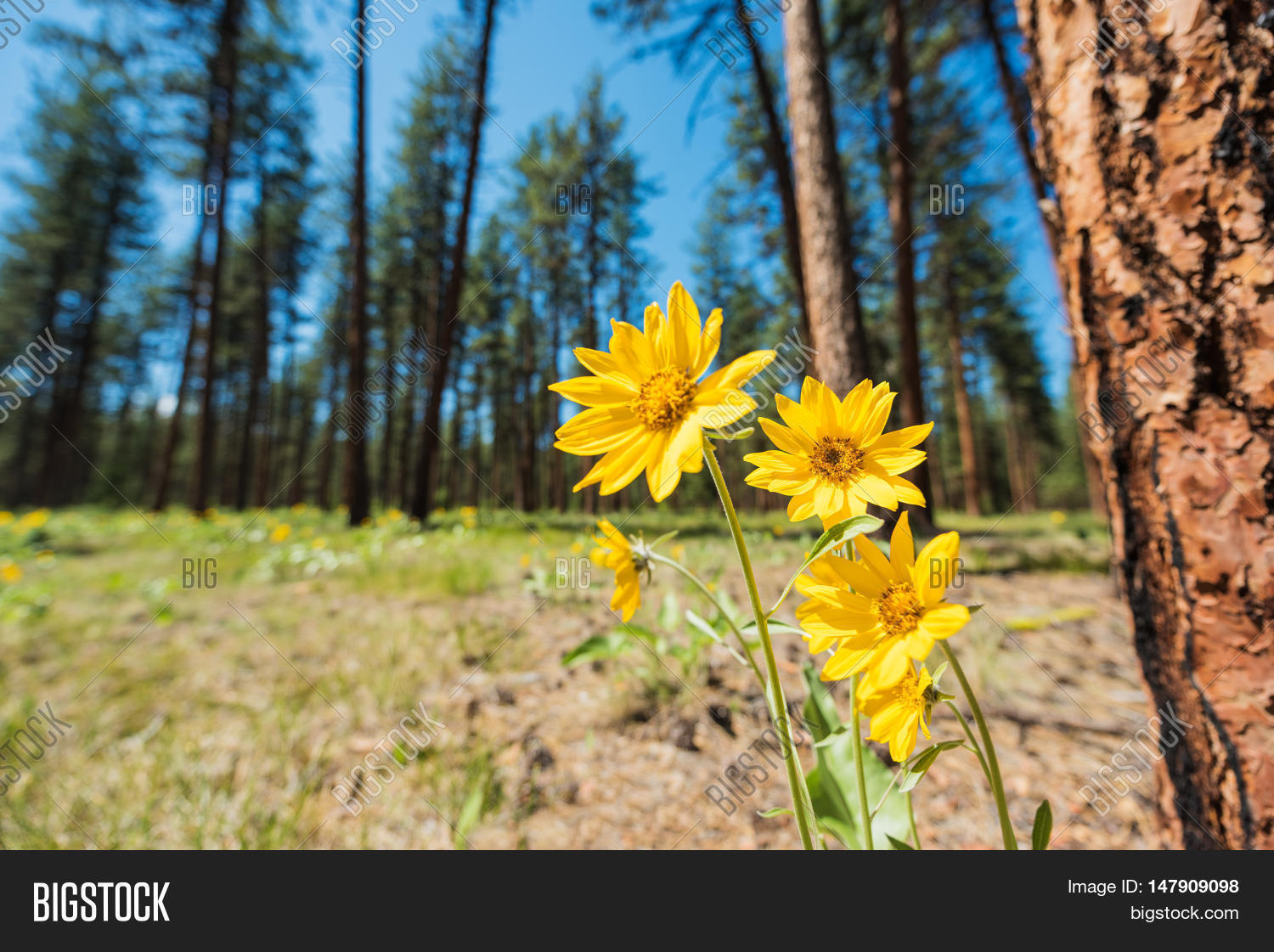 Closeup Yellow Image Photo Free Trial Bigstock