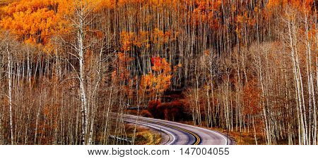 Yellow forest in Autumn time